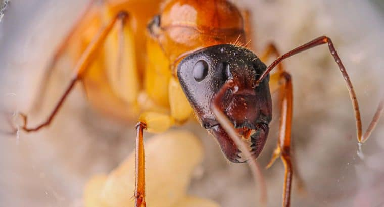 CHEAP ANTS AND NESTS FOR SALE!!!