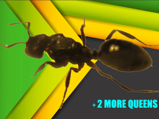 Self-Isolating @ Home TIME KILLER Active Ant Queen Care Set ULTIMATE BOREDOM BUSTER