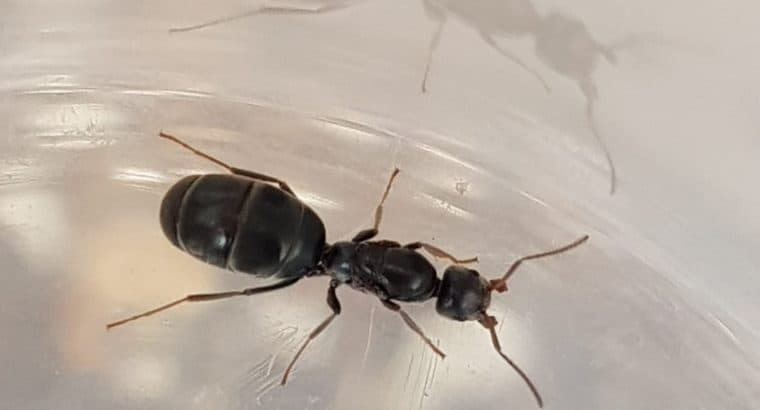 Queens with eggs